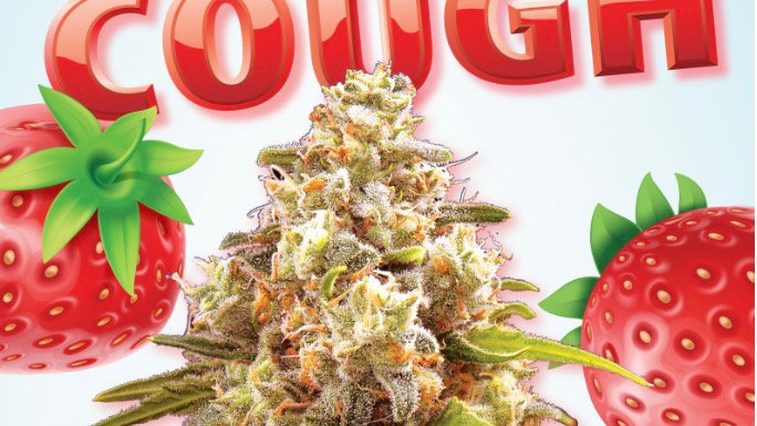Strawberry Cough Autoflower Marijuana Seeds