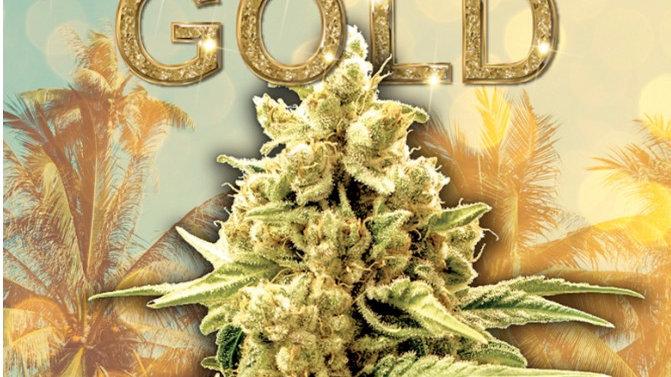 Acapulco Gold Sativa Feminized Marijuana Seeds