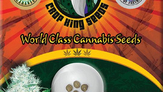 Cali OG Kush Haze 5 seed Pack