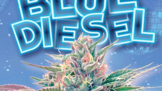 Blue Diesel Autoflower Marijuana Seeds