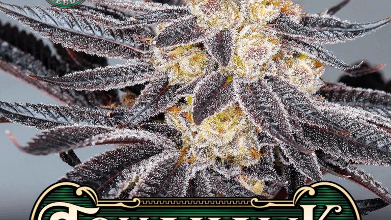 Greenpoint seeds tomahawk 10 reg seed pack