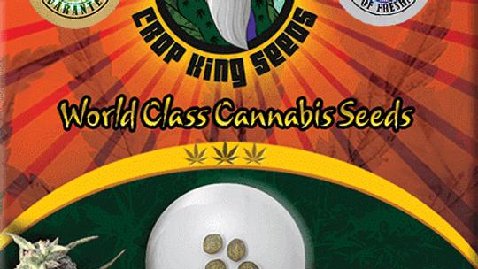 Durban Poison Feminized 5 seed Pack