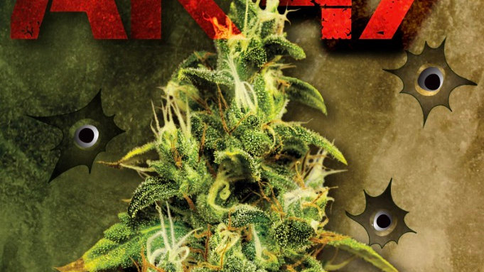 AK47 Hybrid Feminized Marijuana Seeds