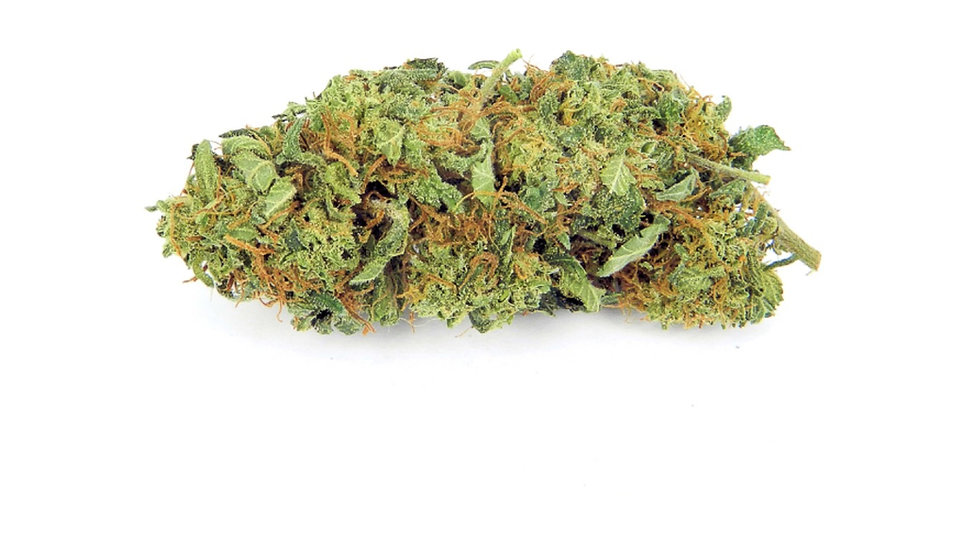 Bubba Gump 5 regular seeds pack