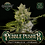 Thumbnail: Greenpoint-Pebble Pusher 10 regular seed pack