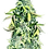 Thumbnail: Crown Royale Feminized 5 seed pack Crop King