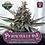 Thumbnail: Greenpoint-Periwinkle Pie