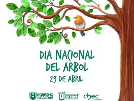 Día nacional de árbol!