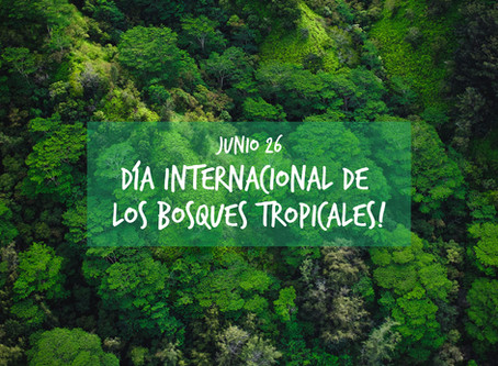 Día internacional de los bosques tropicales!💚🌿