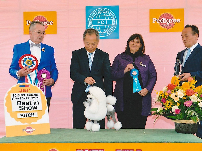 SUP.INT.AM.KOR.JAP.CH.VOGUE LINE I'M MAY 2016 International Dog Show in NAGANO