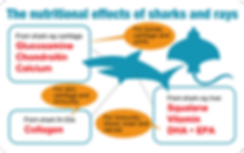 The nutritional effects of sharks and rays