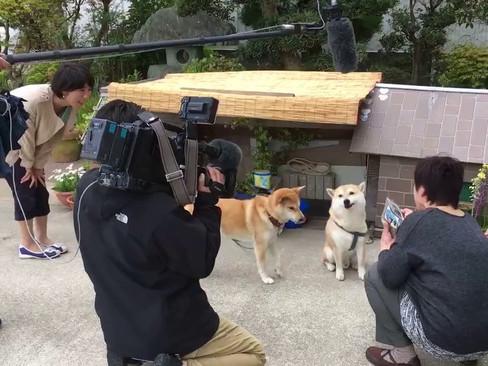 NHK「ニュース神戸発」「ぐるっと関西おひるまえ」取材