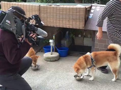 ペットフード テレビ大阪「ニュースリアル」 取材