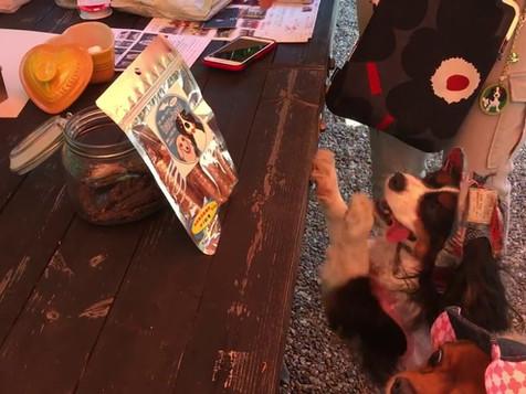 かわいいキャバリアも大興奮!BAU-BAU 犬のおやつ