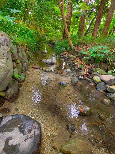 下鴨神社 湧き水 川