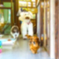 大阪豊中ドッグサロンfuca ノーゲージでワンちゃん預かり LINEで動画配信
