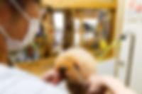 osaka-dogsalon-trimming.jpg