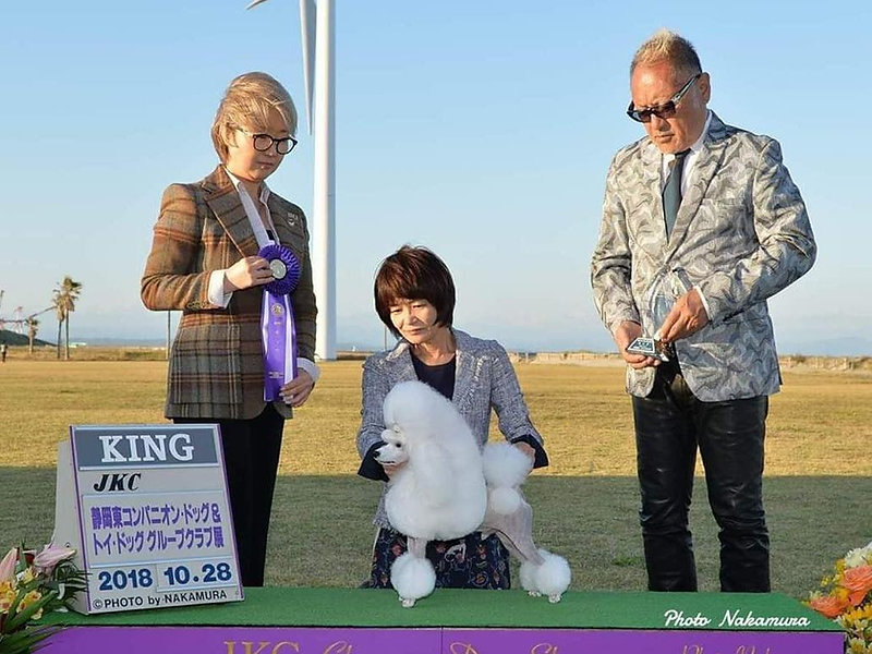 Oct.28,2018 Group Dog Show in Shizuoka-ken