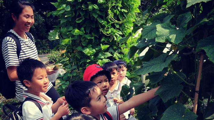 jacob ballas garden