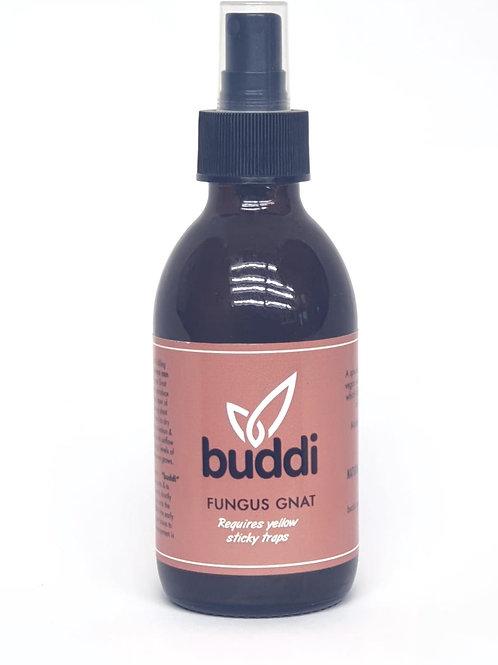 Buddi Fungus Gnat