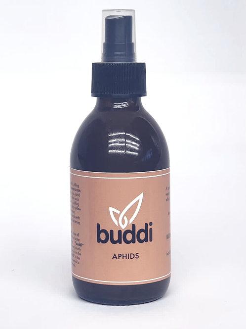 Buddi Aphids