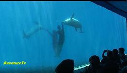 Aquarium de Cuba sur AventureTv