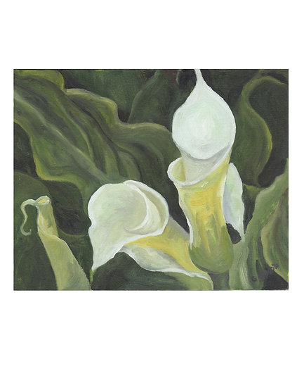 White Calla Lily -original oil painting by Gail M Austin