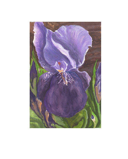Mixed media framed flower painting by Gail M Austin -Purple Iris Majesty