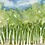Thumbnail: Rainy Forest