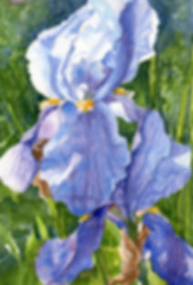 Watercolor Iris painting, purple iris, green background, wall art, sold, ordering information