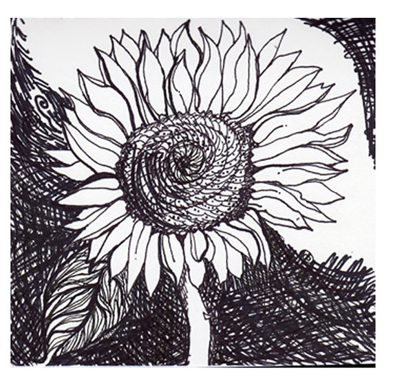 Sunflower -Art drawing on paper black inks and marker by Gal M Austin