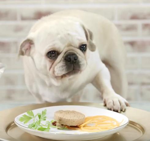 Bentley's Dog Chef