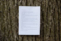 img_tree_poem.jpg