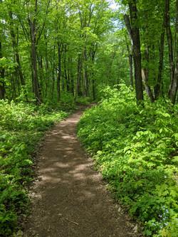Chapel Falls Trail