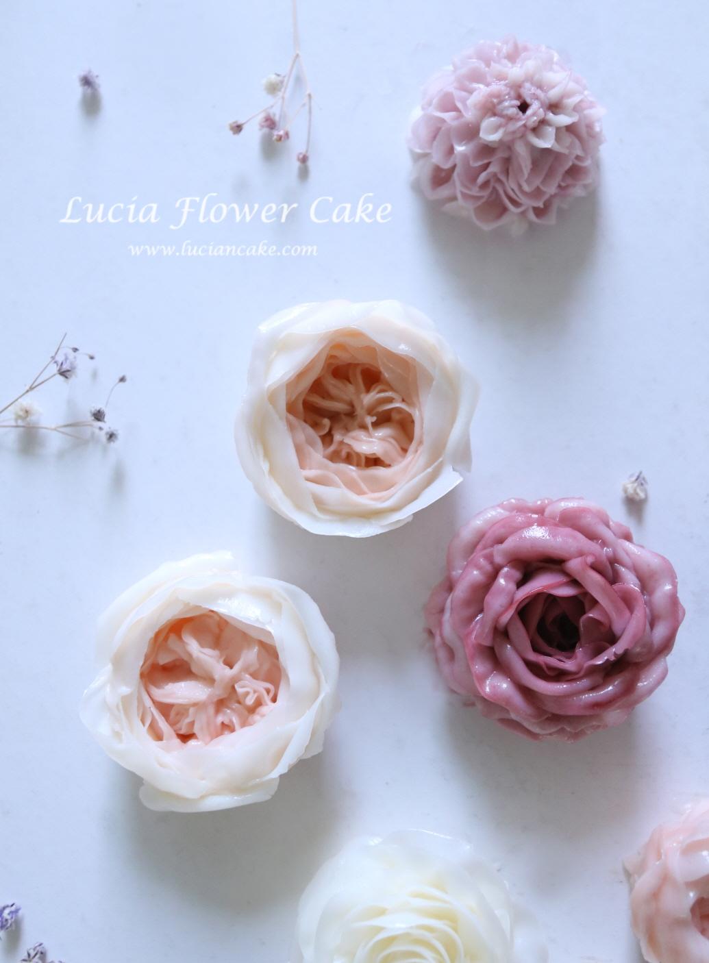 lucia's work