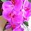 Thumbnail: Fuchsia Pink Phalaenopsis Orchid Silk Wedding Bouquet