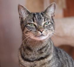 great cat photo_edited.jpg