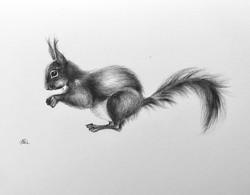 Squirrel Delight
