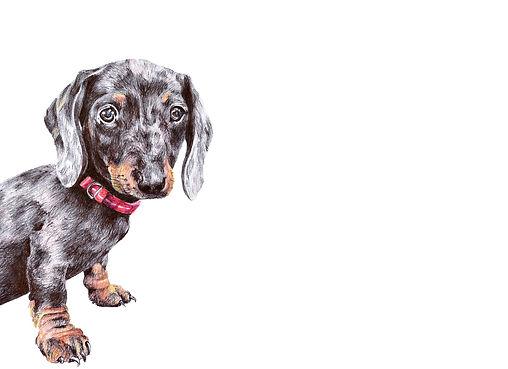dachshundsm.jpg