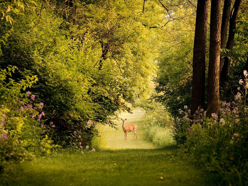 deer%20on%20grass%20field%20photography_edited.jpg