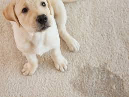 Pet Stain treatment by Alaska Carpet Cleaning Fairbanks Ak