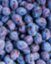 Ripe organic plums on the farmers market