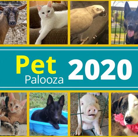 The Village of St. Edward Virtual Pet Palooza