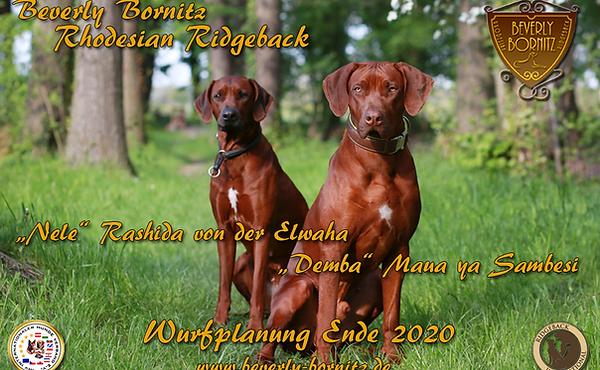wurfplanung_2020.png