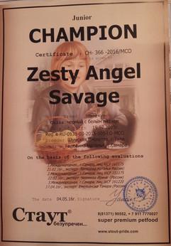 Сертифкат чемпиона