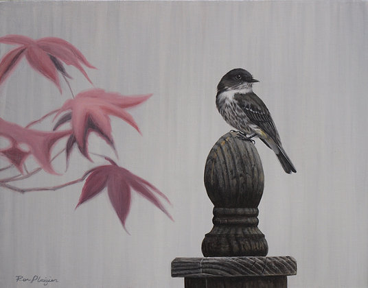 "Olive-sided Flycatcher - 11""x14"" Original"