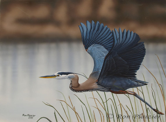 "Blue Heron 18""x24"" - Sold -"