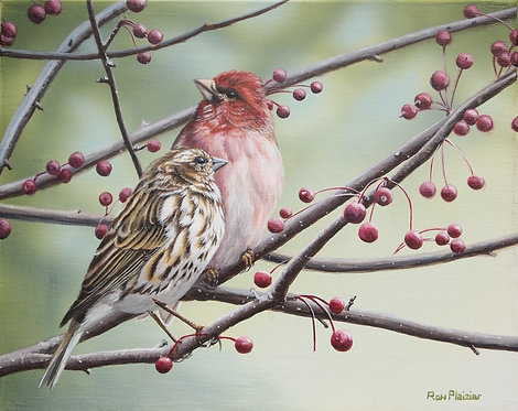 """Purple Finches - 8""""x10"""" framed original - SOLD -"""