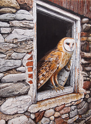 "Barn Owl - 24""x18"" framed original"