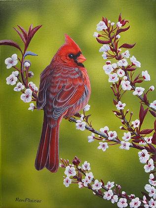 """Cardinal on a sand cherry bush - 12""""x9"""" Print"""
